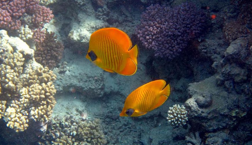 the underwater life of the Red Sea - Egypt Vacation Tours (1)