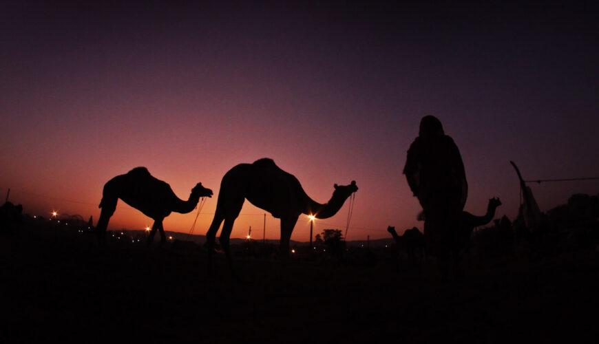 Camel Market - Egypt Vacation Tours (1)